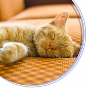 Sleeping Cat Image