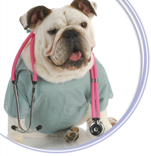 after hours veterinary emergency clinic pets world